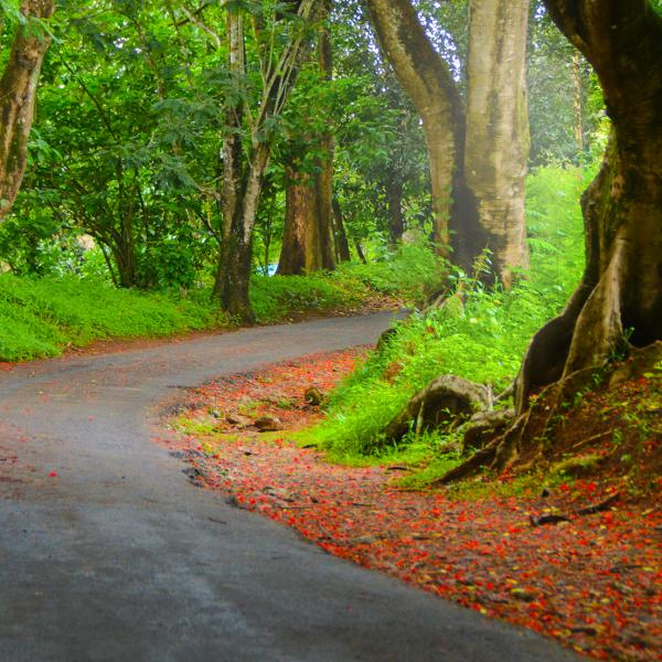 Wayanad -Roadways
